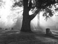 cemetery-fog-1186733-1280x960